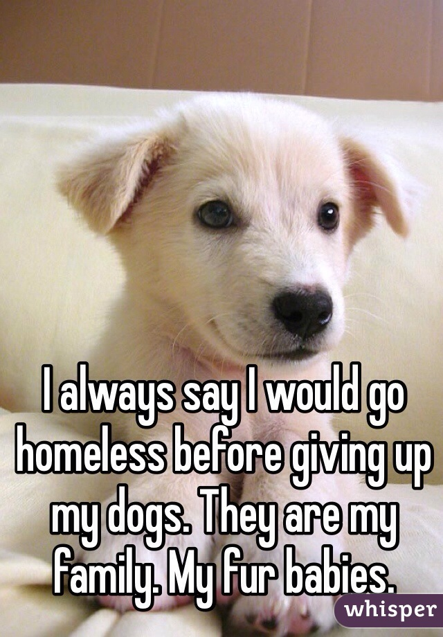 I always say I would go homeless before giving up my dogs. They are my family. My fur babies.