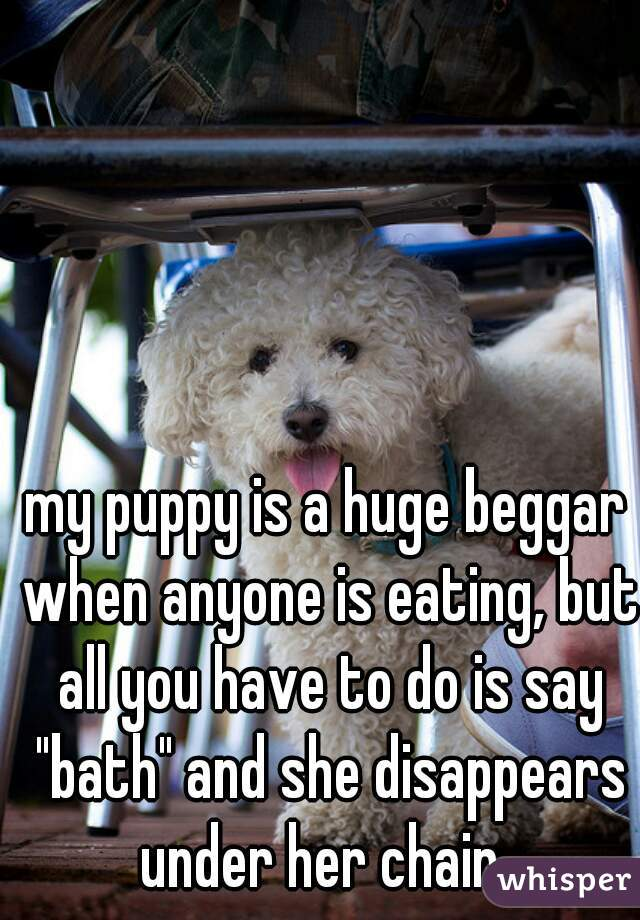 """my puppy is a huge beggar when anyone is eating, but all you have to do is say """"bath"""" and she disappears under her chair."""