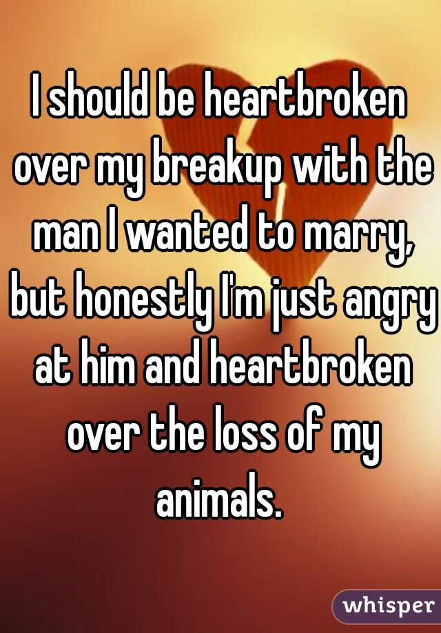 I should be heartbroken over my breakup with the man I wanted to marry, but honestly I'm just angry at him and heartbroken over the loss of my animals.