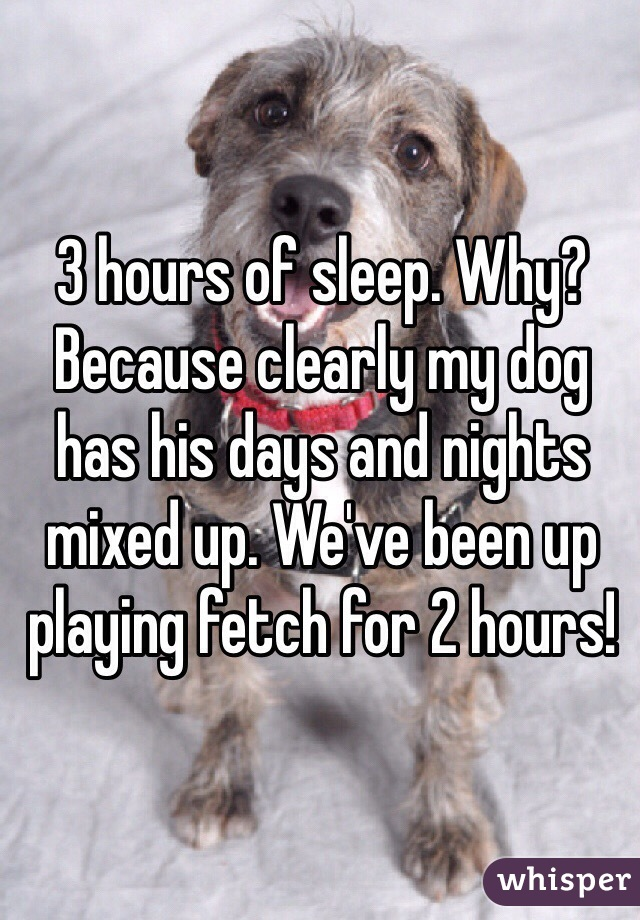 3 hours of sleep. Why? Because clearly my dog has his days and nights mixed up. We've been up playing fetch for 2 hours!