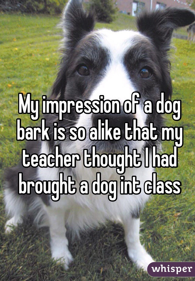 My impression of a dog bark is so alike that my teacher thought I had brought a dog int class
