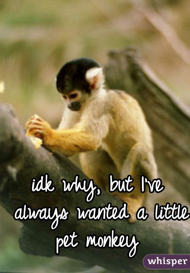 idk why, but I've always wanted a little pet monkey
