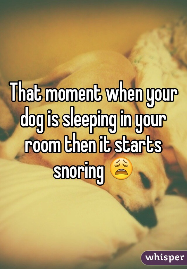 That moment when your dog is sleeping in your room then it starts snoring 😩
