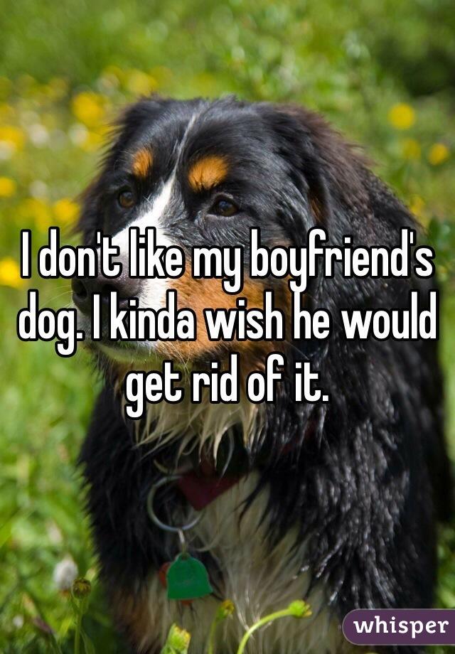 I don't like my boyfriend's dog. I kinda wish he would get rid of it.