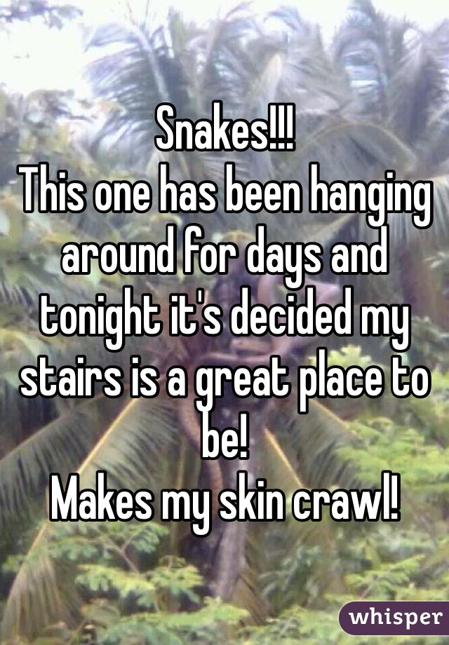 Snakes!!!  This one has been hanging around for days and tonight it's decided my stairs is a great place to be!  Makes my skin crawl!
