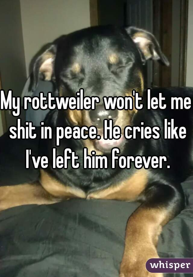 My rottweiler won't let me shit in peace. He cries like I've left him forever.