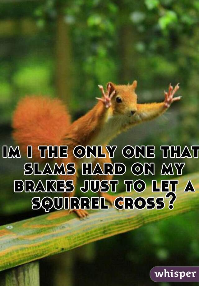 im i the only one that slams hard on my brakes just to let a squirrel cross?