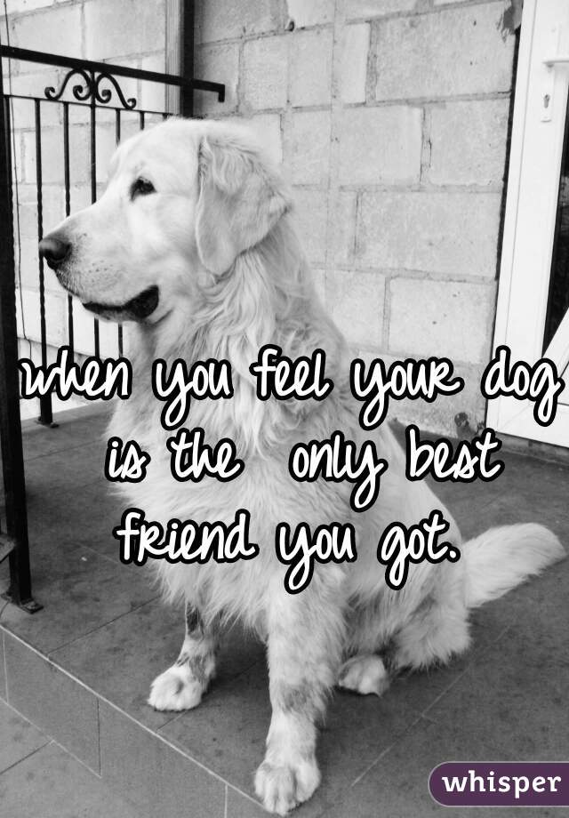 when you feel your dog is the  only best friend you got.