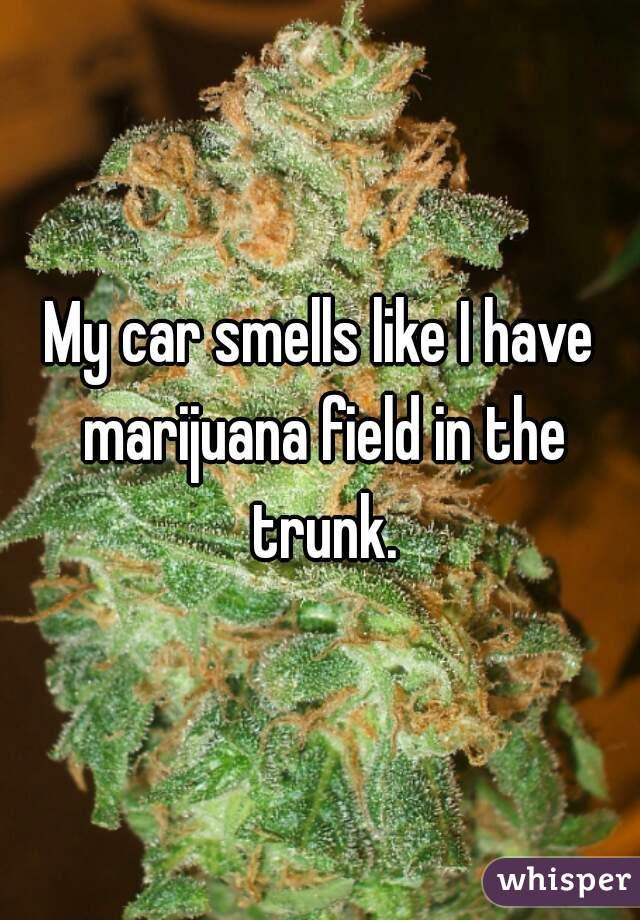 My car smells like I have marijuana field in the trunk.
