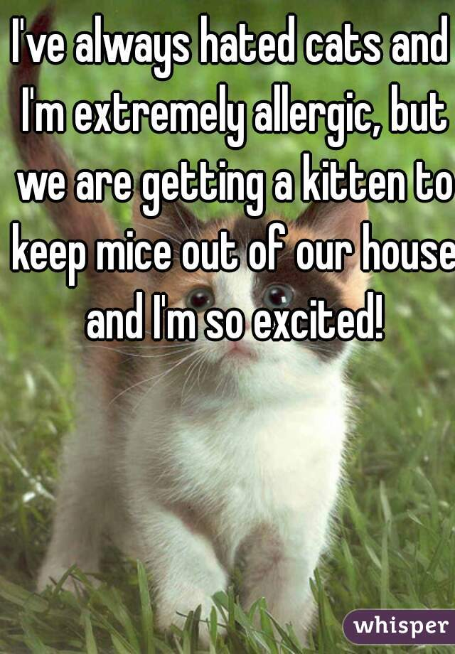 I've always hated cats and I'm extremely allergic, but we are getting a kitten to keep mice out of our house and I'm so excited!