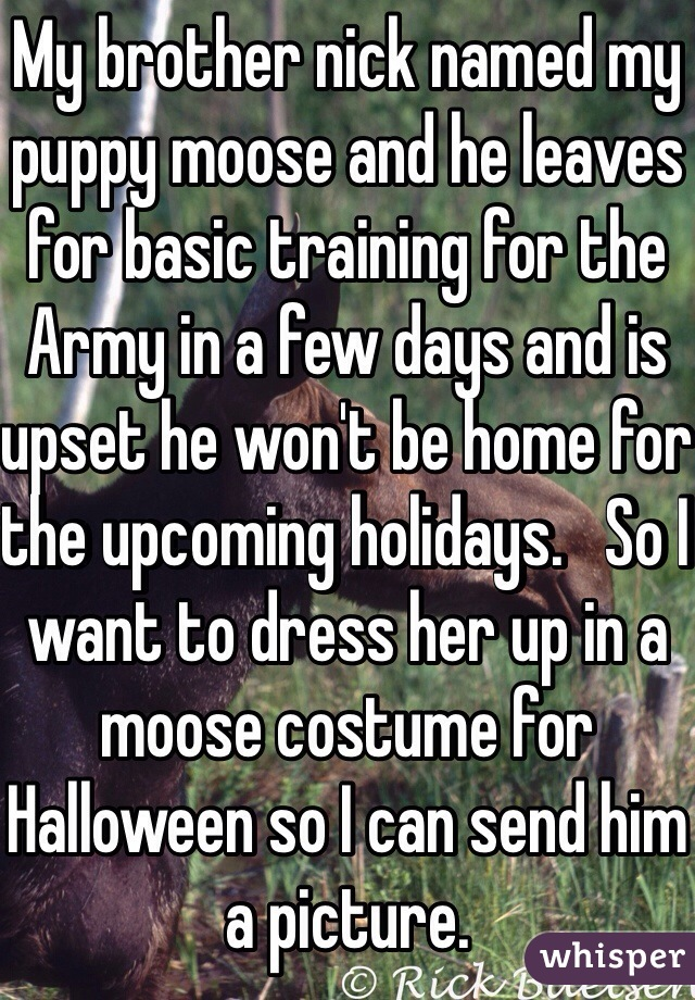 My brother nick named my puppy moose and he leaves for basic training for the Army in a few days and is upset he won't be home for the upcoming holidays.   So I want to dress her up in a moose costume for Halloween so I can send him a picture.