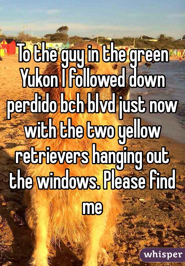 To the guy in the green Yukon I followed down perdido bch blvd just now with the two yellow retrievers hanging out the windows. Please find me