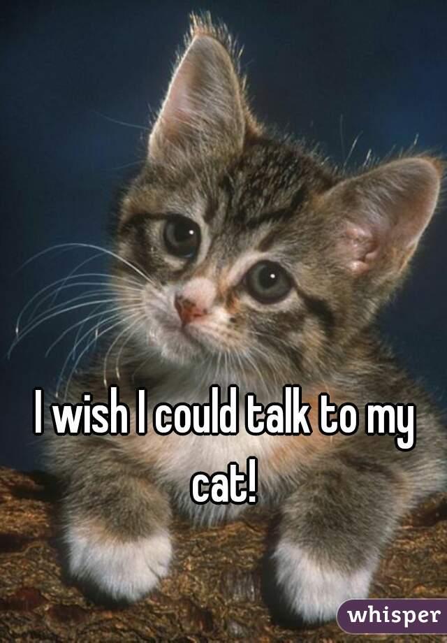I wish I could talk to my cat!