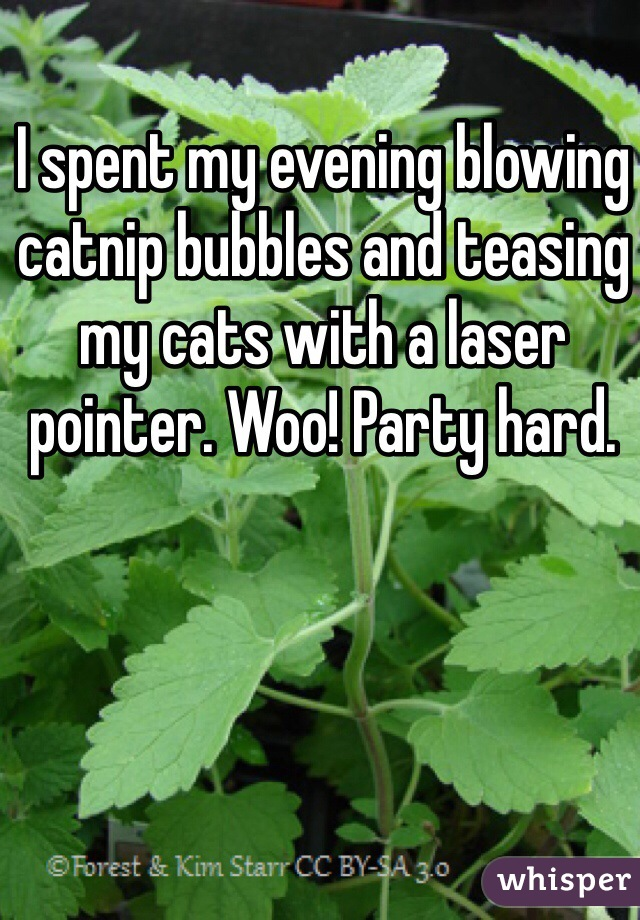 I spent my evening blowing catnip bubbles and teasing my cats with a laser pointer. Woo! Party hard.