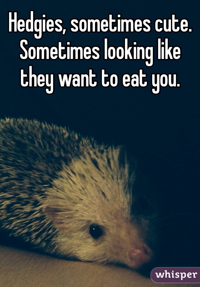 Hedgies, sometimes cute. Sometimes looking like they want to eat you.
