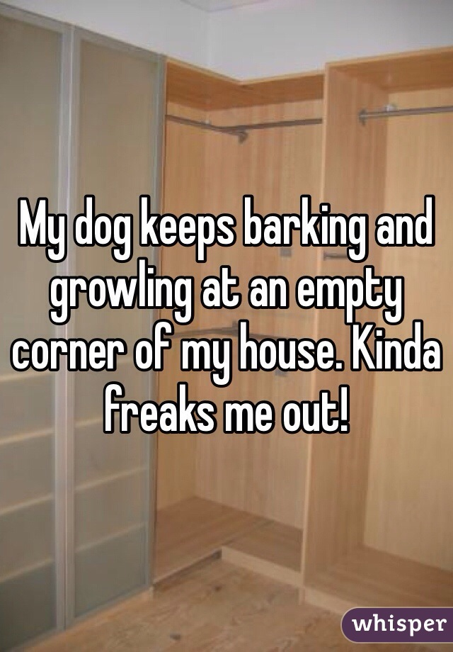 My dog keeps barking and growling at an empty corner of my house. Kinda freaks me out!