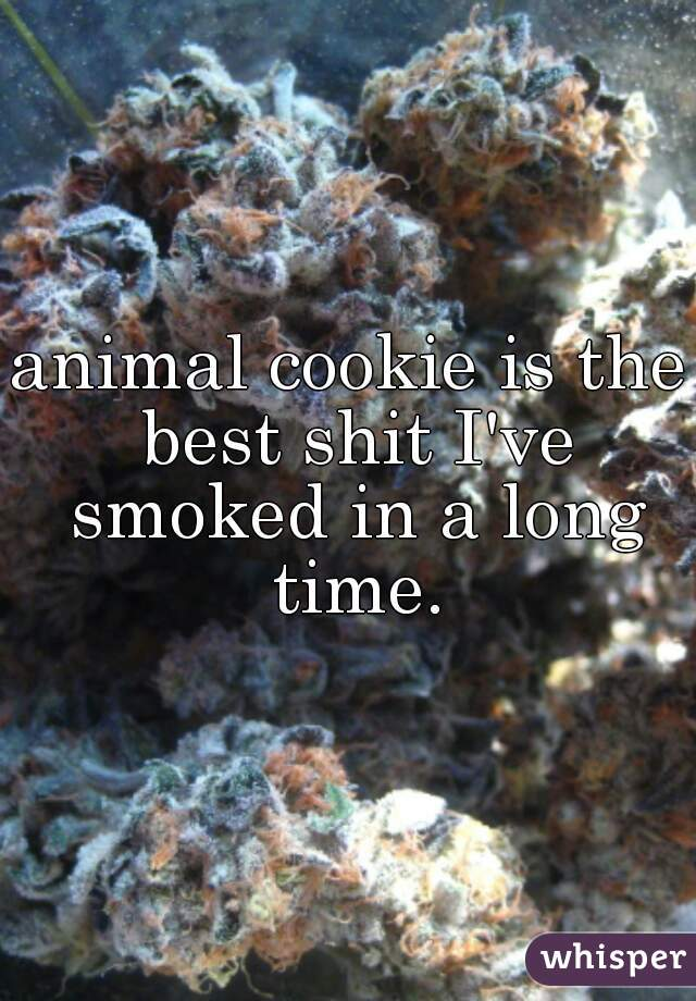 animal cookie is the best shit I've smoked in a long time.