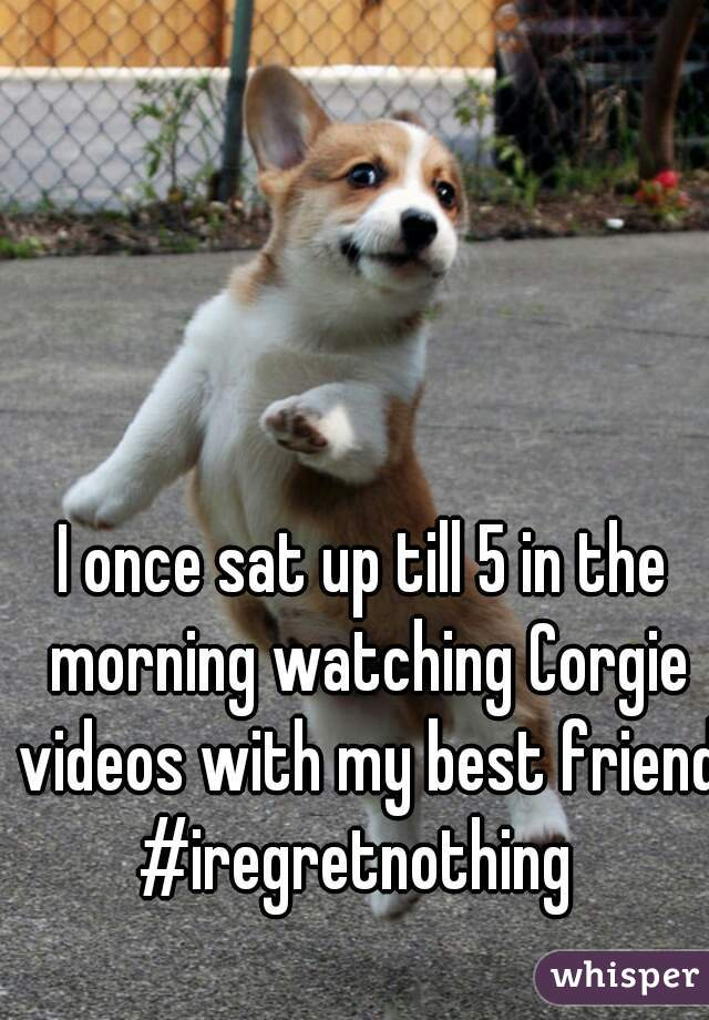 I once sat up till 5 in the morning watching Corgie videos with my best friend! #iregretnothing