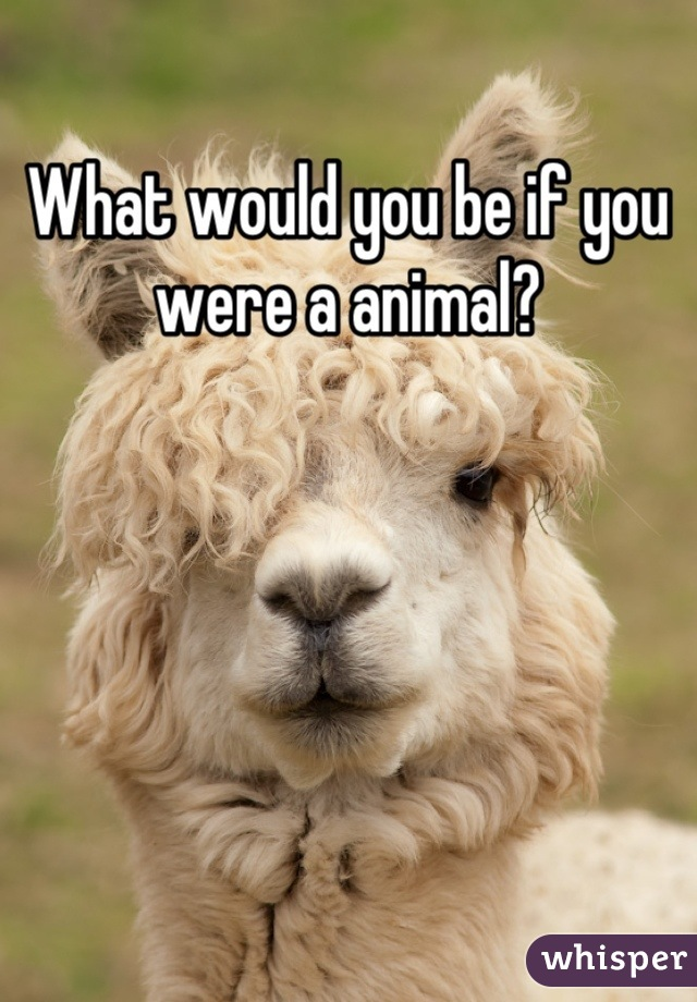 What would you be if you were a animal?