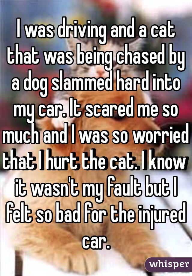 I was driving and a cat that was being chased by a dog slammed hard into my car. It scared me so much and I was so worried that I hurt the cat. I know it wasn't my fault but I felt so bad for the injured car.