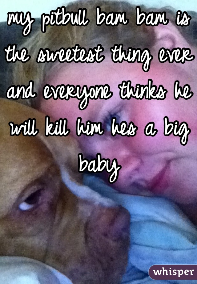 my pitbull bam bam is the sweetest thing ever and everyone thinks he will kill him hes a big baby