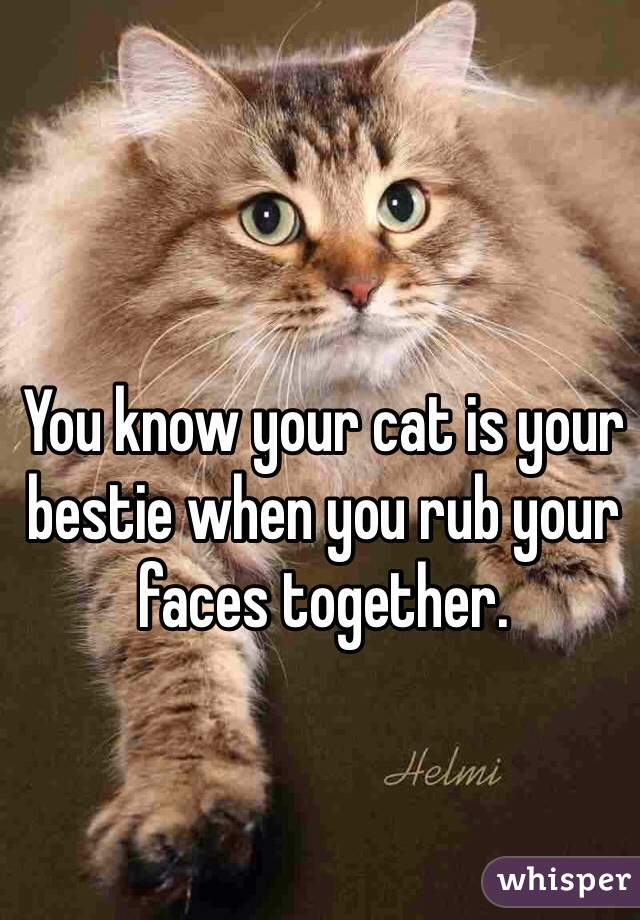 You know your cat is your bestie when you rub your faces together.