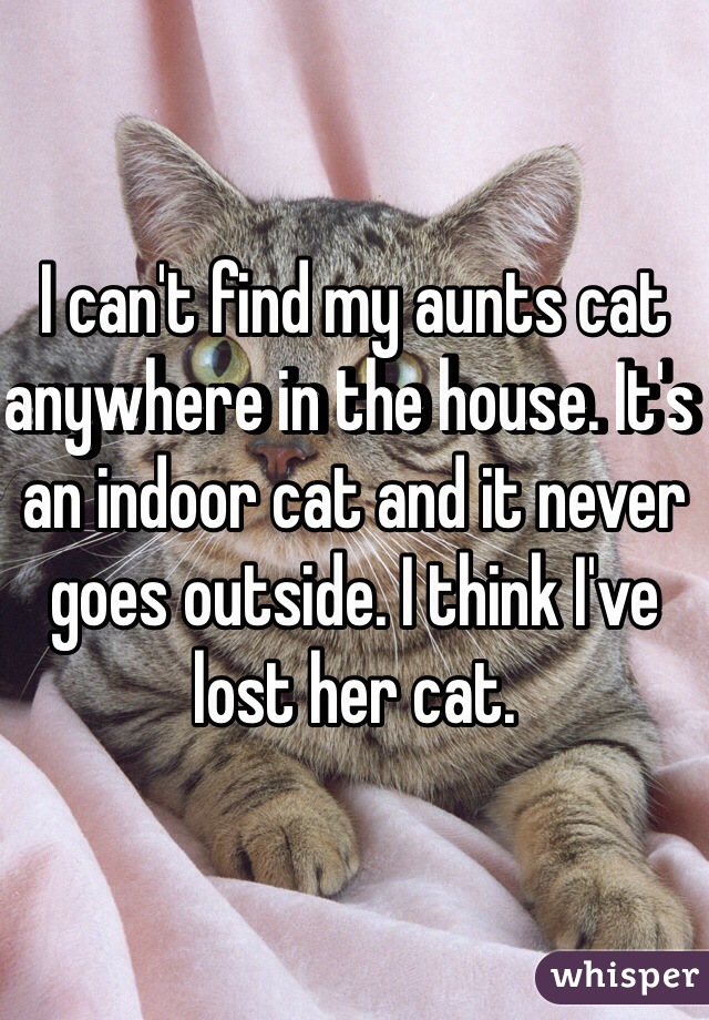 I can't find my aunts cat anywhere in the house. It's an indoor cat and it never goes outside. I think I've lost her cat.