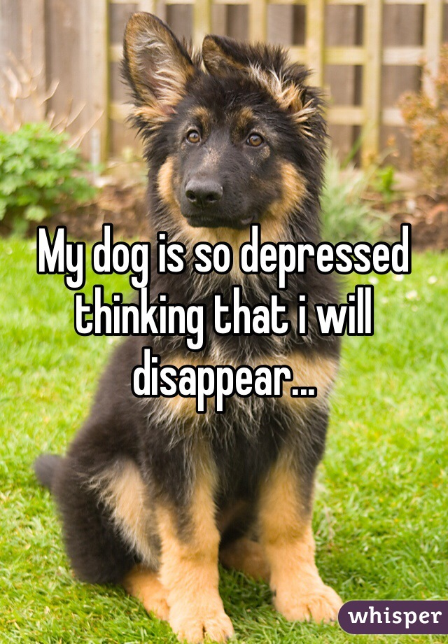 My dog is so depressed thinking that i will disappear...