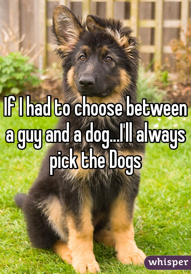 If I had to choose between a guy and a dog...I'll always pick the Dogs