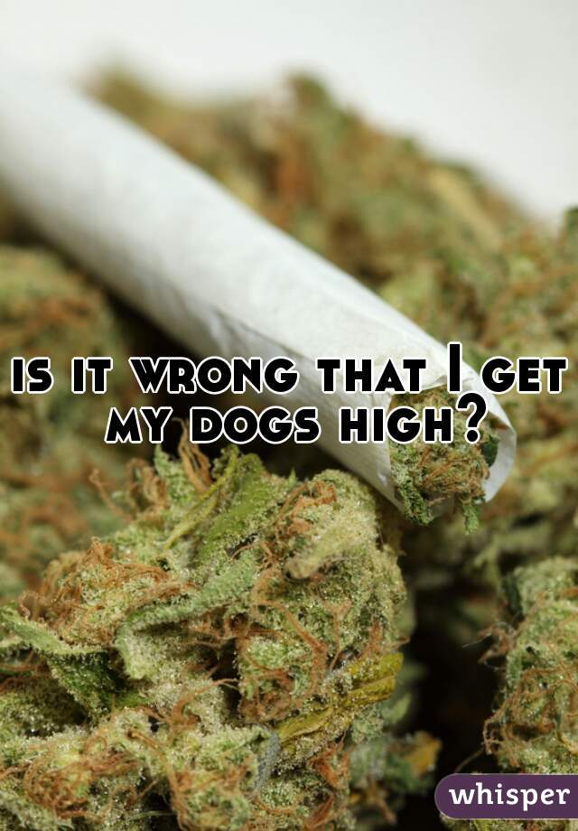 is it wrong that I get my dogs high?