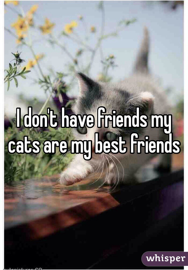 I don't have friends my cats are my best friends
