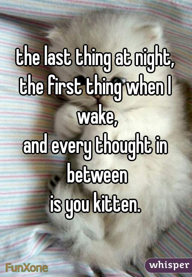 the last thing at night, the first thing when I wake, and every thought in between is you kitten.