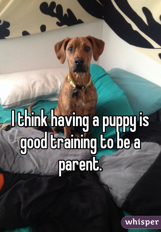 I think having a puppy is good training to be a parent.