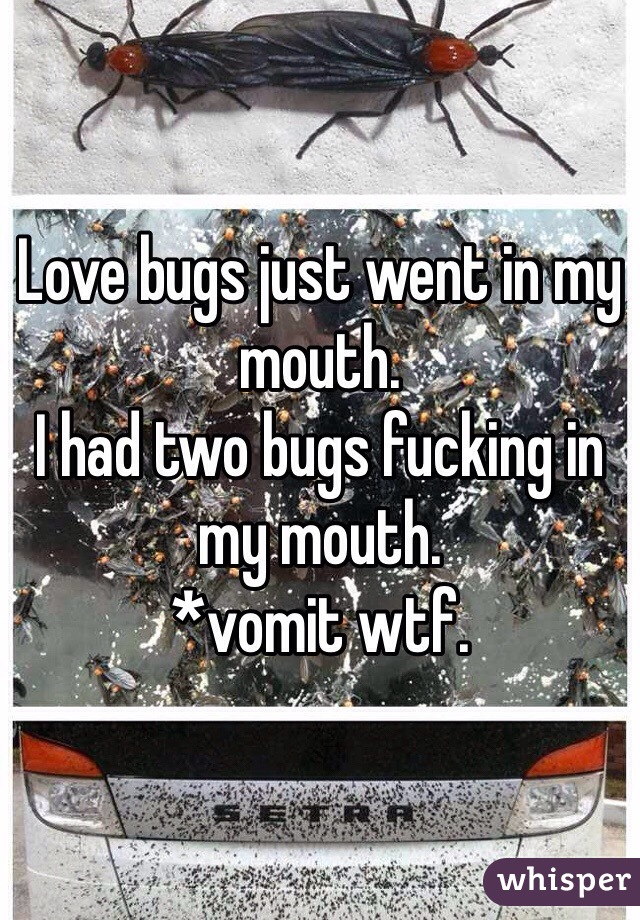 Love bugs just went in my mouth.  I had two bugs fucking in my mouth.  *vomit wtf.