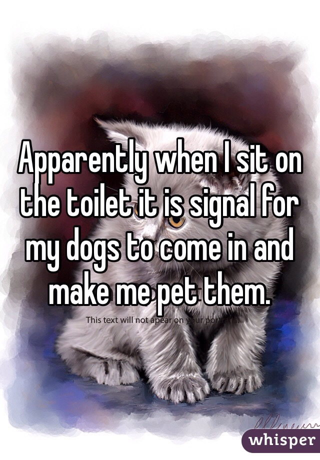 Apparently when I sit on the toilet it is signal for my dogs to come in and make me pet them.