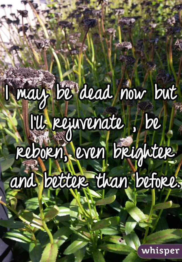 I may be dead now but I'll rejuvenate , be reborn, even brighter and better than before.