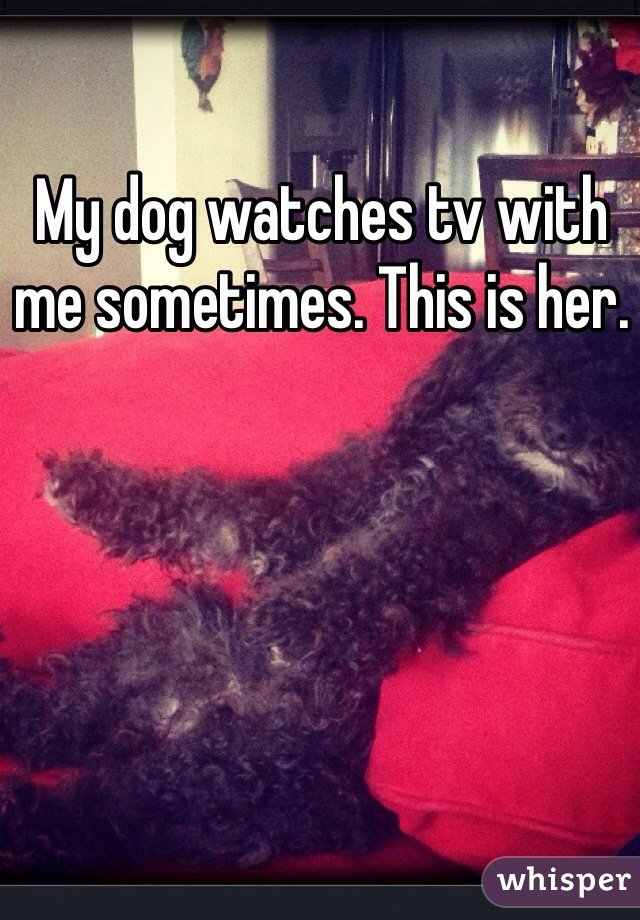 My dog watches tv with me sometimes. This is her.
