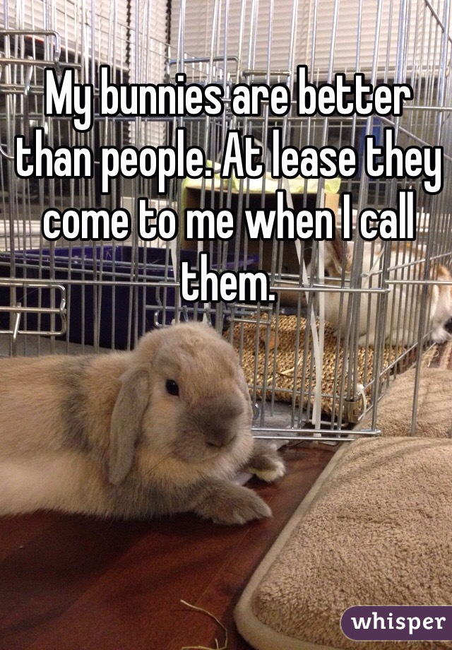 My bunnies are better than people. At lease they come to me when I call them.