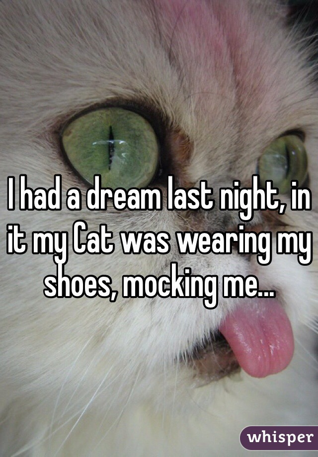 I had a dream last night, in it my Cat was wearing my shoes, mocking me...