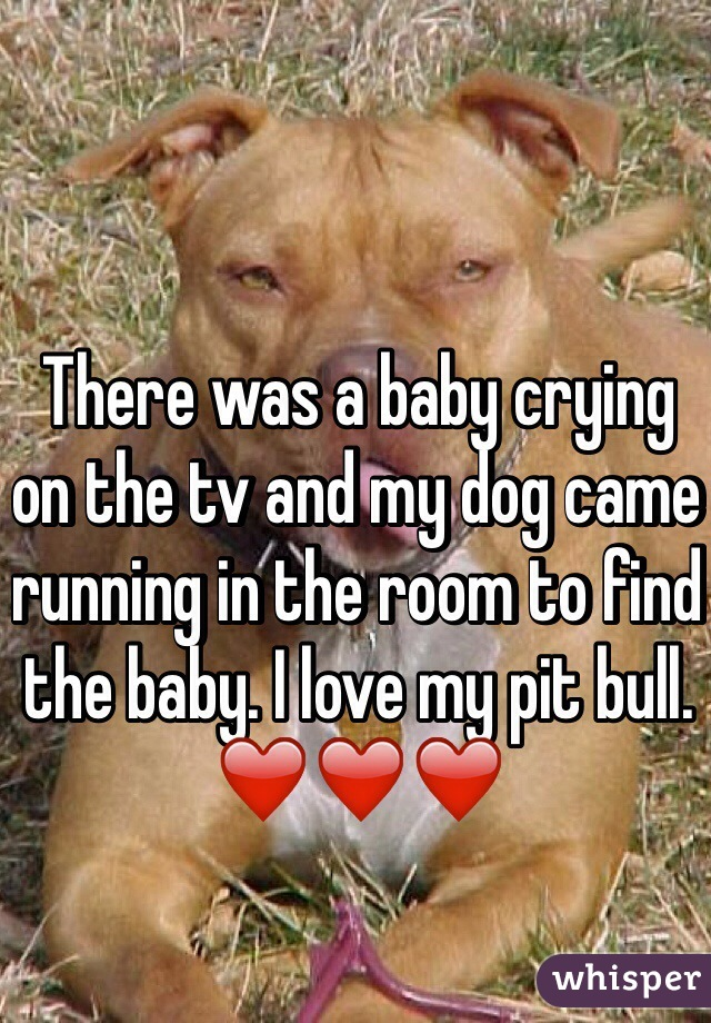 There was a baby crying on the tv and my dog came running in the room to find the baby. I love my pit bull. ❤️❤️❤️