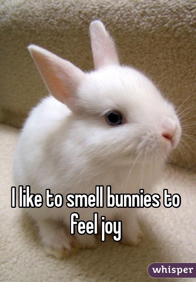 I like to smell bunnies to feel joy