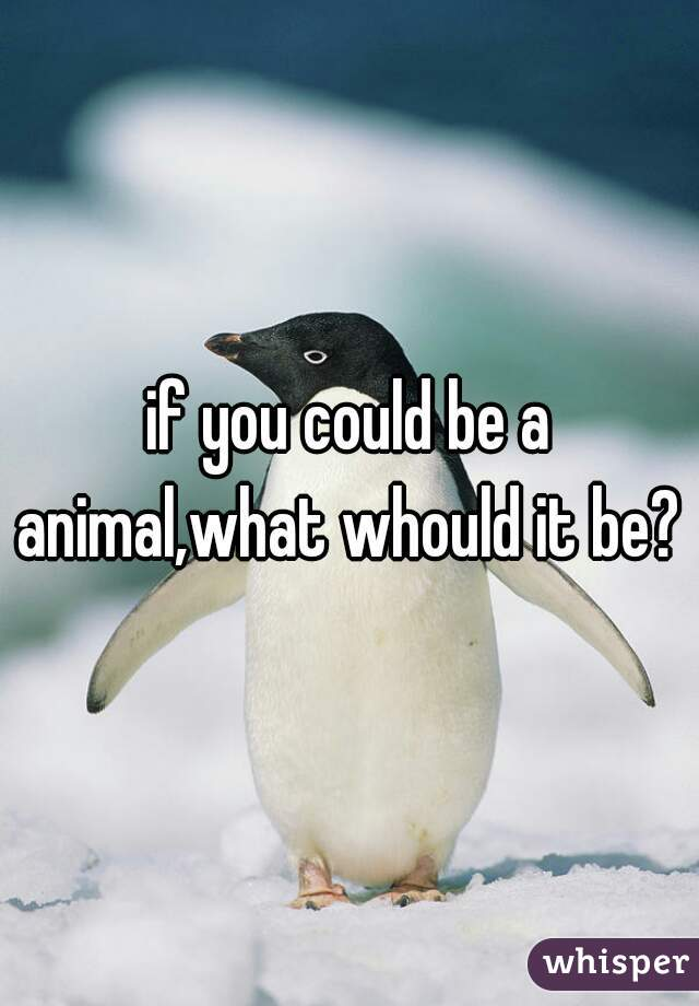 if you could be a animal,what whould it be?