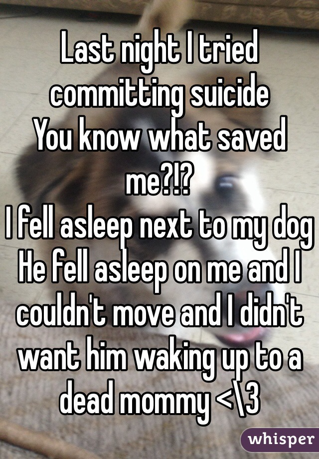 Last night I tried committing suicide  You know what saved me?!?  I fell asleep next to my dog  He fell asleep on me and I couldn't move and I didn't want him waking up to a dead mommy <\3