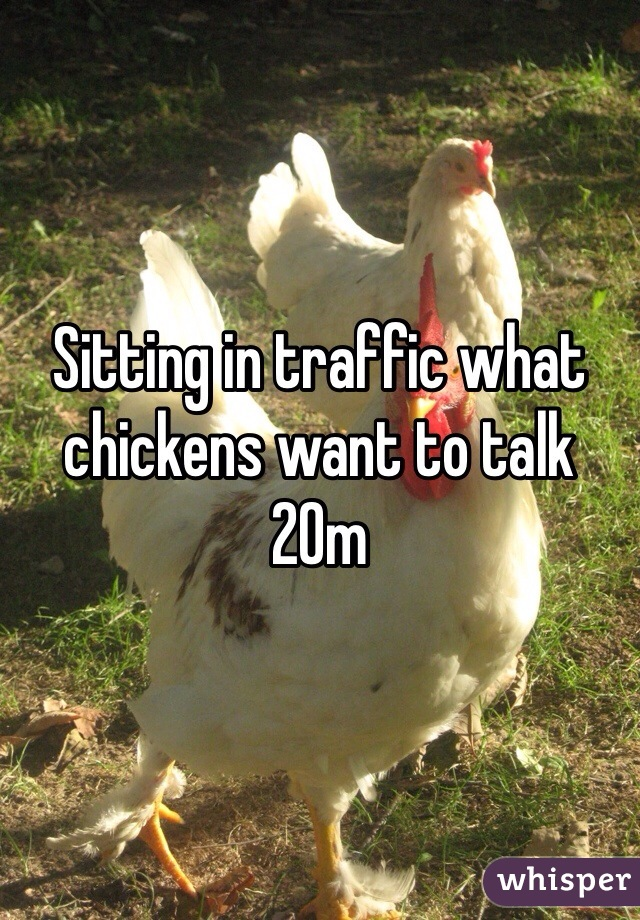 Sitting in traffic what chickens want to talk 20m