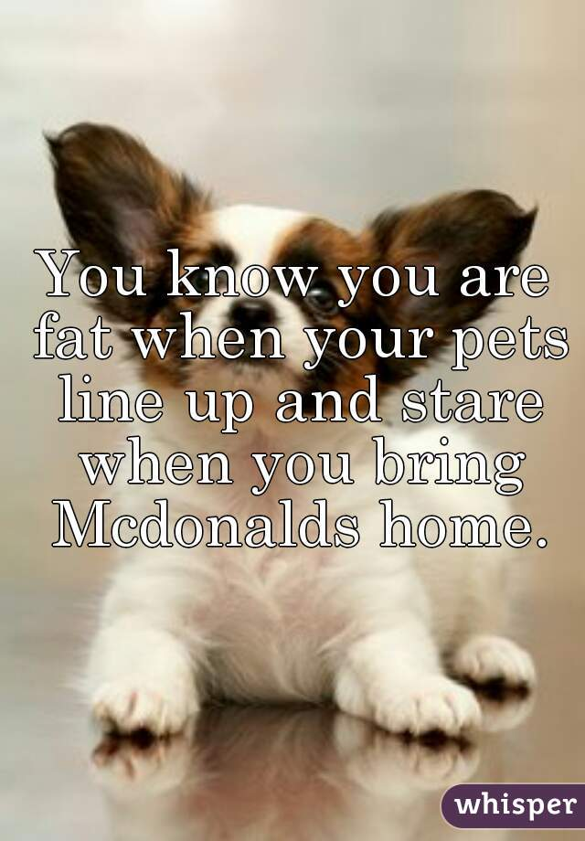 You know you are fat when your pets line up and stare when you bring Mcdonalds home.
