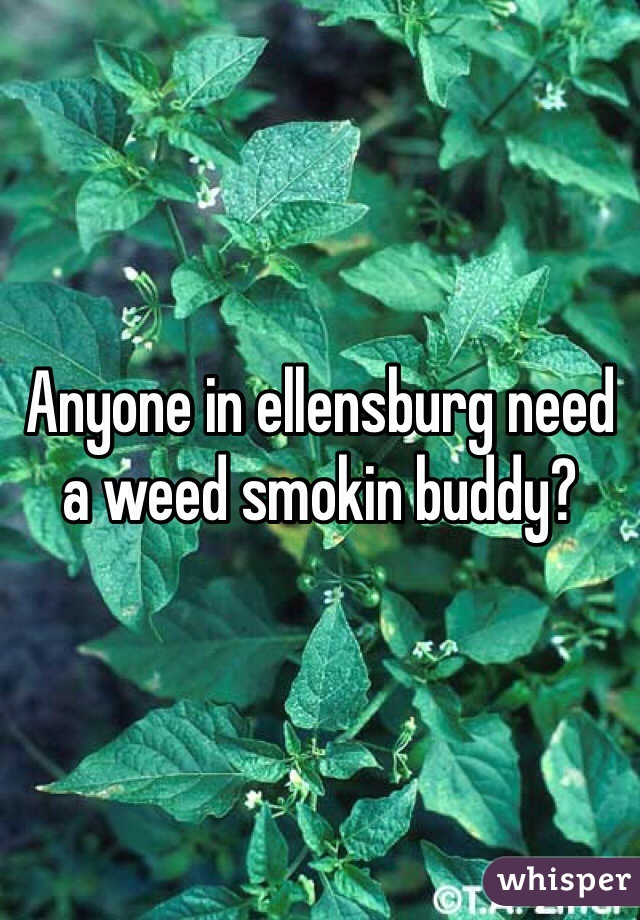 Anyone in ellensburg need a weed smokin buddy?