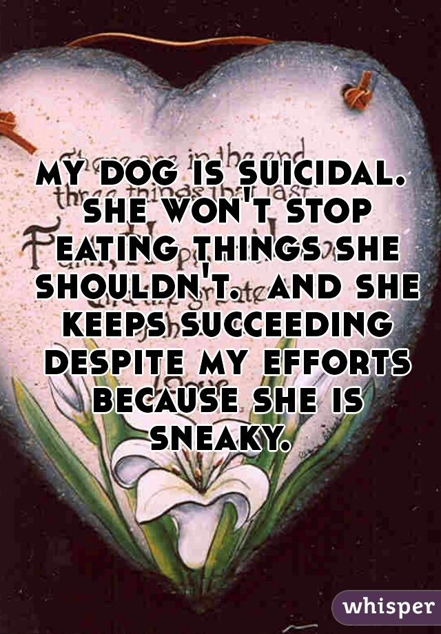 my dog is suicidal. she won't stop eating things she shouldn't.  and she keeps succeeding despite my efforts because she is sneaky.