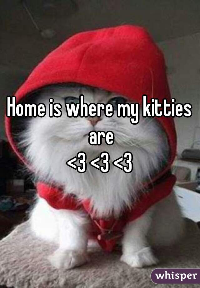 Home is where my kitties are <3 <3 <3