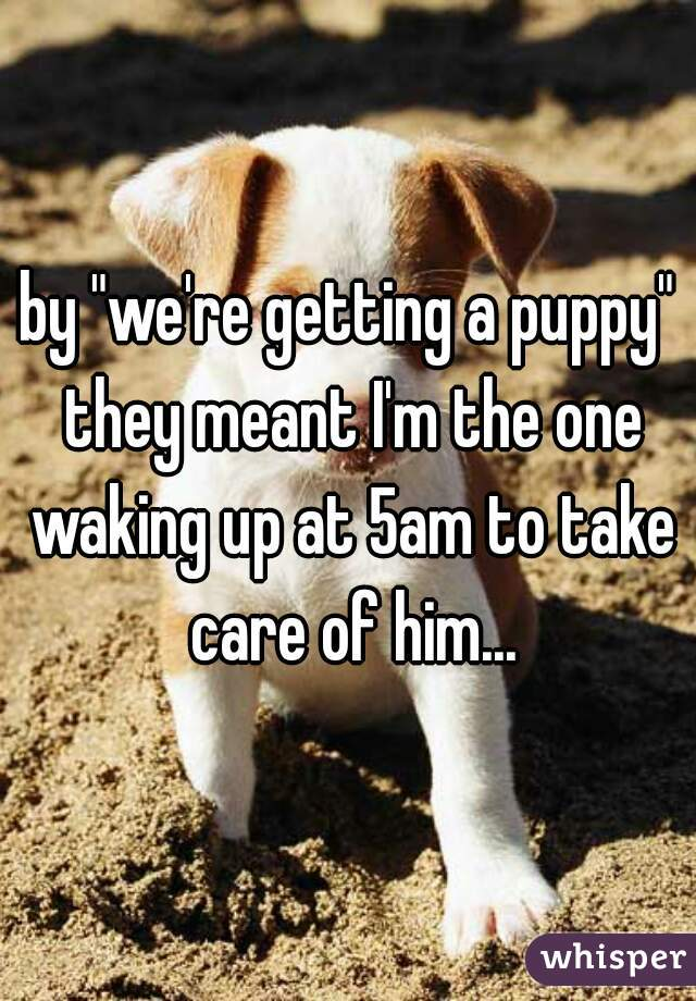 """by """"we're getting a puppy"""" they meant I'm the one waking up at 5am to take care of him..."""