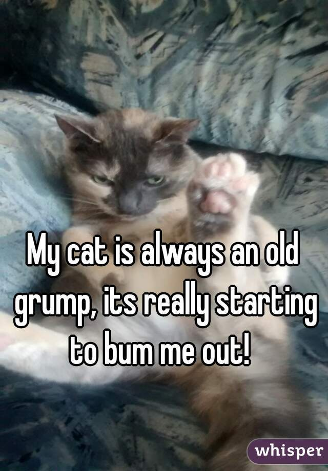 My cat is always an old grump, its really starting to bum me out!